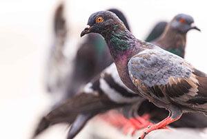 Bird Exclusion & Management